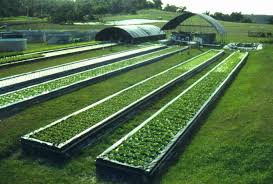 aquaponics system aquaponics a system of aquaculture in which the