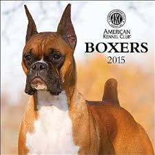 boxer dog 2015 diary cheap club calendar find club calendar deals on line at alibaba com
