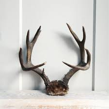 hunting decorations for home decor incredible collection of antler decor for living rooms