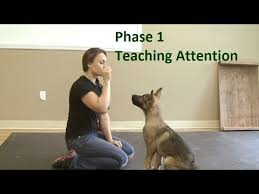 belgian shepherd easy to train how to train a dog to pay attention k9 1 com youtube