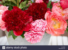 Peony Flowers Peony Flowers Bunch In Red And Pink Colors Stock Photo Royalty