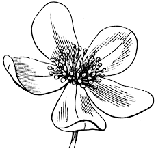 drawing of flower free download clip art free clip art on