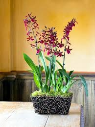 orchids care tips for beautiful indoor plants orchid care interior design