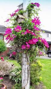 Gardening Tips For Summer - organic gardening u2013 tips for summer growing gardening tips for