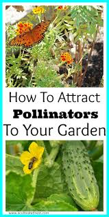 Backyard Vegetable Garden Ideas How To Attract Pollinators To Your Vegetable Garden Vegetable