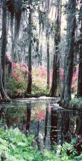 South Carolina natural attractions images Best 25 south carolina ideas congaree national jpg
