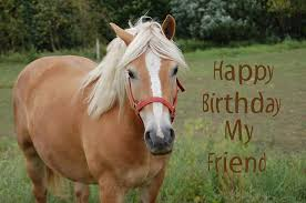 Horse Birthday Meme - horses birthday the gallery for gt happy birthday pictures