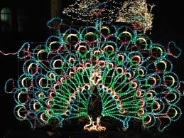 when does the lights at the toledo zoo start 25 best strong for toledo images on pinterest toledo ohio strong