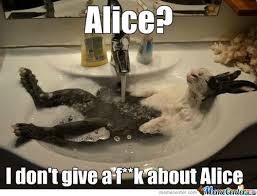 Alice Meme - alice in wonderland memes best collection of funny alice in