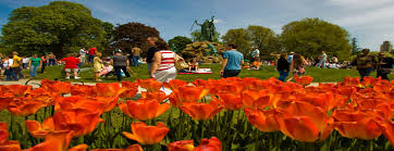Tulip Festival Map News U003e 2017 Tulip Festival Weekend Kicks Off Friday