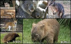 imagenes animales australia australia sus hábitats y animales biopedia