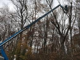 crow s nest hazard tree work natural lands