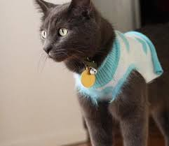 cat breed info list of cat breeds types of cat breeds with