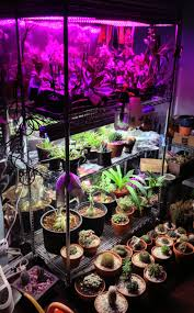 my led u0026 fluorescent indoor garden currently supporting orchids