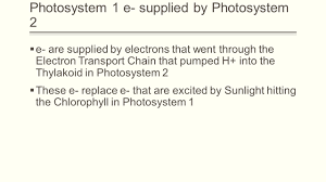 photosynthesis light dependent reactions light reactions ppt