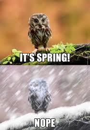 Nope Meme - it s spring nope owl meme google search things that make me