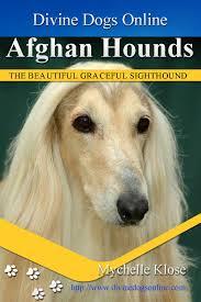 afghan hound underwater divine dogs online
