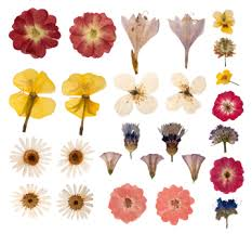 dried flowers 8 pressed flower craft ideas grower direct fresh cut flowers
