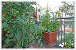 build a self sufficient lifestyle in the burbs city or country