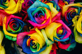 Colored Roses Free Photo Roses Colored Tinted Colorful Free Image On