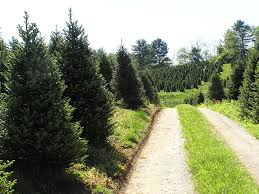 boone nc christmas tree farms christmas lights decoration