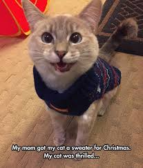 Holiday Memes - 25 best cat memes images on pinterest funny kitties kawaii cat
