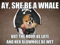 Doge Sex Meme - enjoy talk like a pirate day with sexual innuendo dog