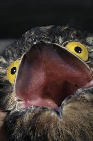 Potoo Bird Meme - potoo photos meme guy