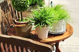 Potted Plants For Patio Potted Green Plants On Wooden Patio Table Stock Photo Picture And