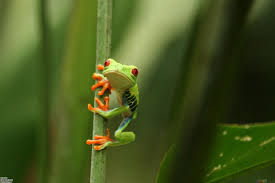41 free frog wallpapers and screensavers frog 100 quality hd