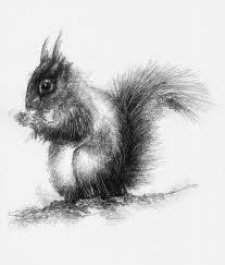 red squirrel artist sean briggs producing a sketch a day prints