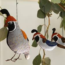30 best quail images on quails beautiful birds and nature