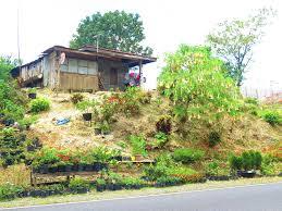 little baguio in mindanao bukidnon to davao road becomingfilipino