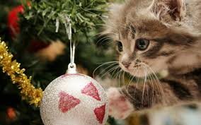 pet christmas wallpaper hd android apps on google play