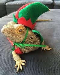 Bearded Dragon Halloween Costume Elf Costume Bearded Dragons Size Fits