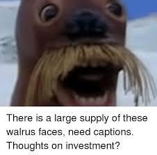 Walrus Meme - walrus and walrus meme on me me