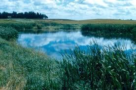 Prairies In World Map by The Wetlands Gallery