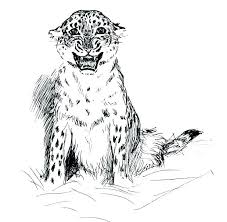 snow tiger coloring page snow leopard coloring pages leopard tiger on a tree branch coloring