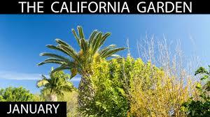 the california garden in january garden tour youtube