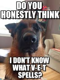 Funny German Shepherd Memes - 20 cute and funny german shepherd memes sayingimages com
