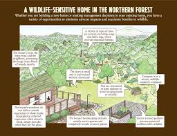 how to make your house green adirondack life article how to make your home wildlife friendly