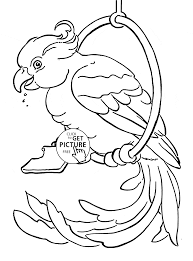 pet parrot coloring page for kids animal coloring pages