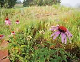 Runge Nature Center To Hold Native Plant Sale March 22 Missouri