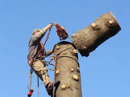 best 25 tree removal service ideas on removal