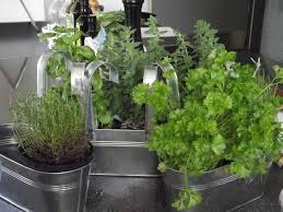 indoor herbs to grow how to make your kids enjoy gardening even in winter mamavation