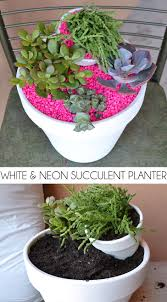 succulent planter white u0026 neon succulent planter dream a little bigger