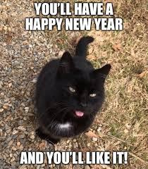Happy New Year Cat Meme - razzed imgflip