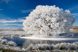frosted willow tree mural david wall murals your way