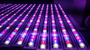 horticultural led grow lights new 72w waterproof horticulture greenhouse hydroponics red blue