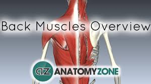 Anatomy Of Human Back Muscles Back Muscles In A Nutshell Anatomy Tutorial Youtube